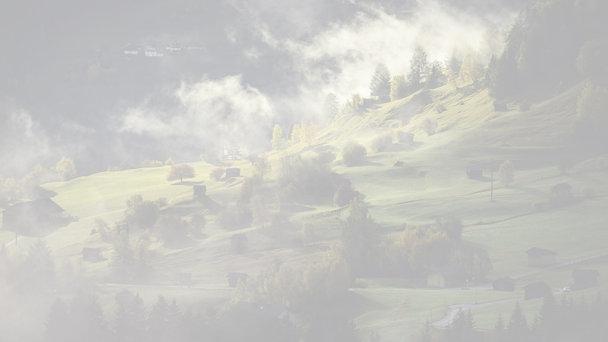 Výrub stromov - Lipany