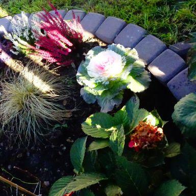 Naj balkón, naj záhradka - jesenné hodnotenie  4. časť